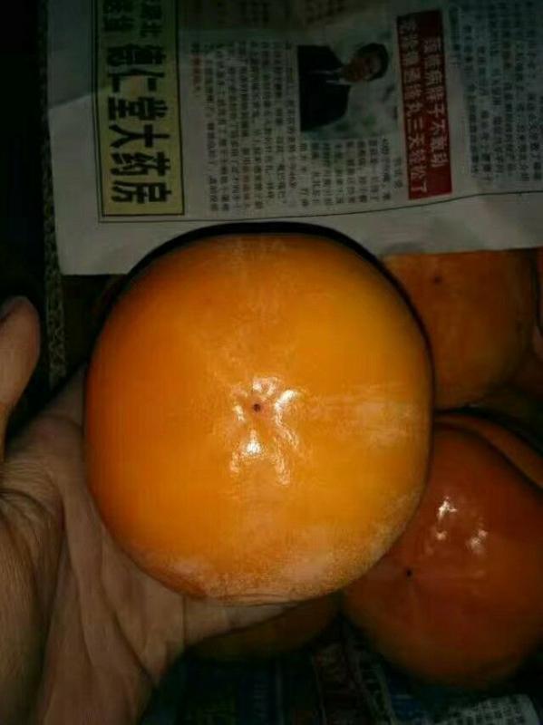 山区产磨盘柿 4~5两以上,一竖两平或三平装