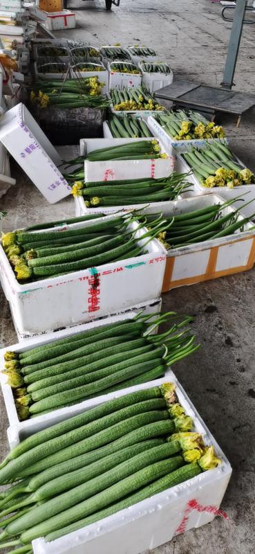 嘉兴银霆农业有限公司--银霆农业之精品鲜花丝瓜
