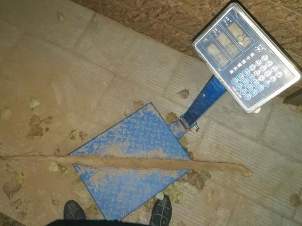 铁棍山药 2~3厘米 特级 70~90厘米