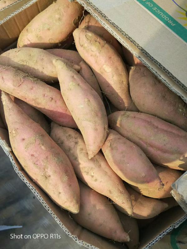 煙薯25.薯產地,基地,批發,電商專供貨源充足
