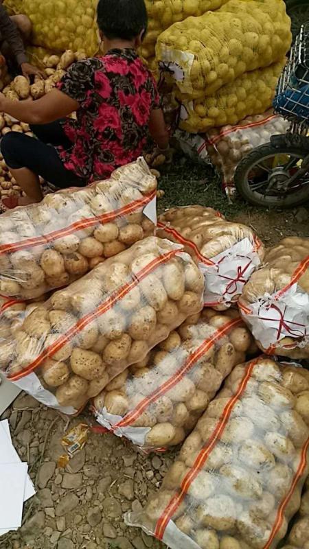 土豆,中薯5,荷兰薯!!!!!!!!!!!!