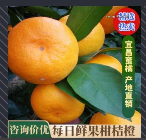 万亩柑桔、蜜桔、橘子、沙糖桔批发产地