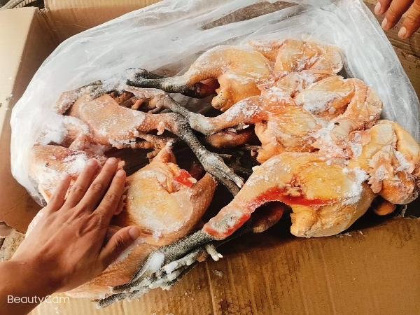 廠家直銷三黃雞,青椒麻雞,老母雞