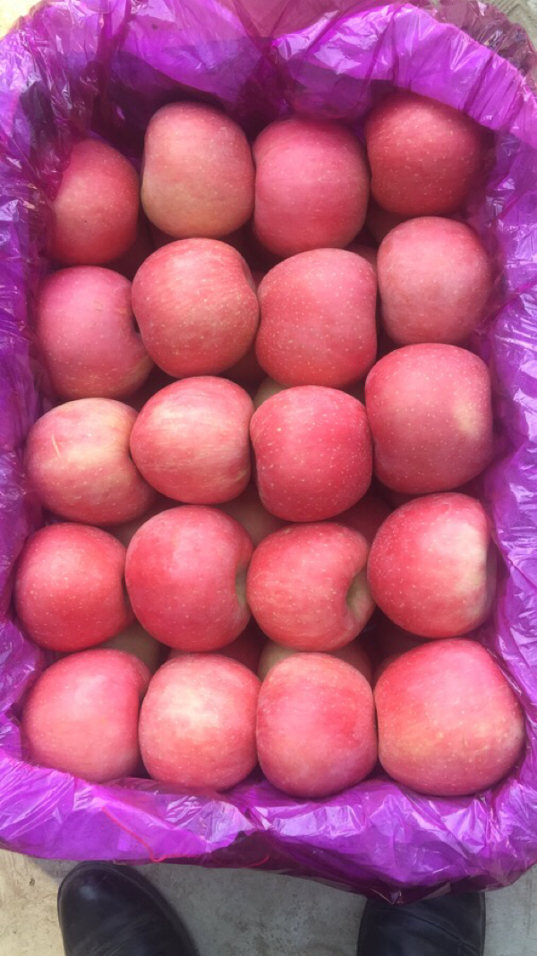 供应红富士苹果,个大味甜香脆可口,山地果,口感很好