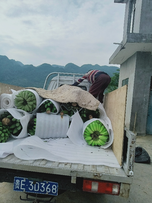 西贡蕉批发