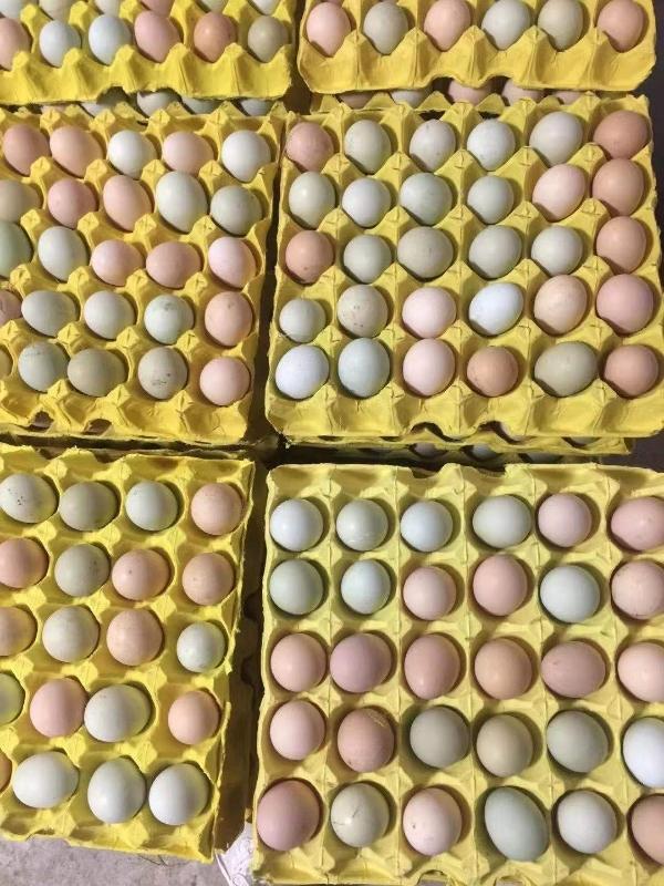 山地放養土雞土雞蛋,每天新鮮供應,可快遞