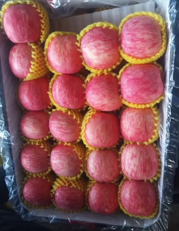 【山东苹果】红富士苹果批发15265888189