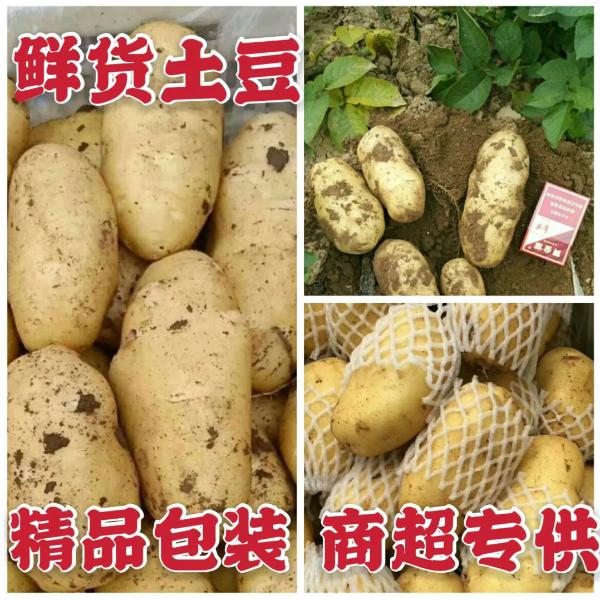 河南土豆批发哪家好,通许土豆上市时间,产地代办电话
