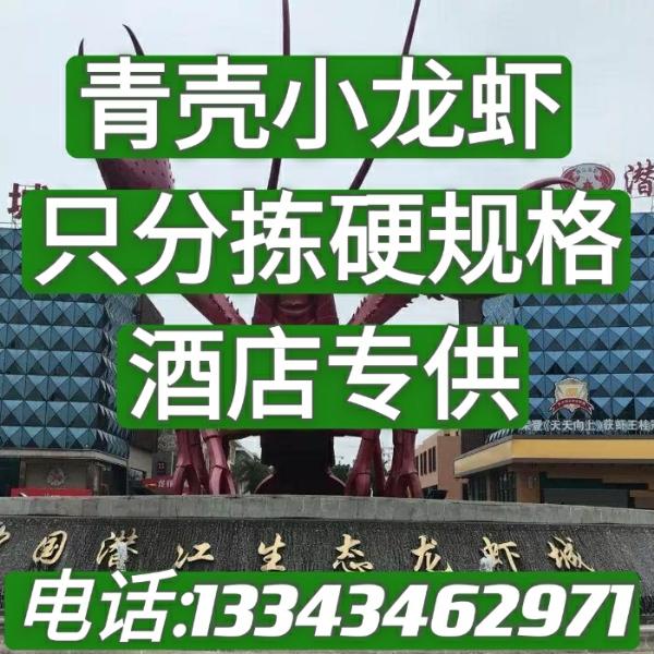 湖北潛江青殼蝦小龍蝦清水小龍蝦全年供應酒店蝦直供