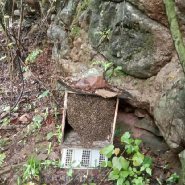 湖南省永州市道县马垒村老李,有纯天然蜂蜜出售!