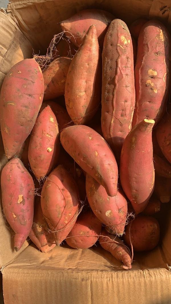 煙薯25,蜜薯,產地直供,誠信為本,質量為生。