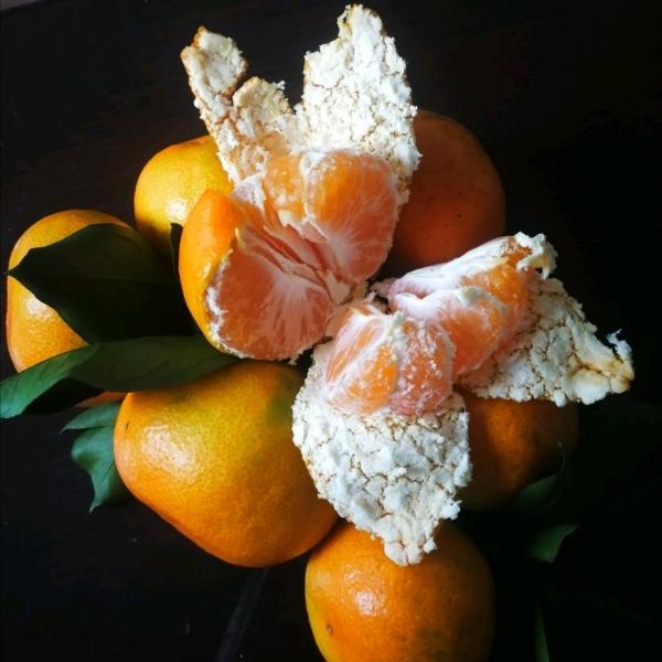湖北蜜桔/柑桔/椪柑/蜜柚/各类脐橙